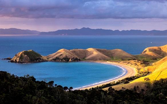 Auckland - Wellington